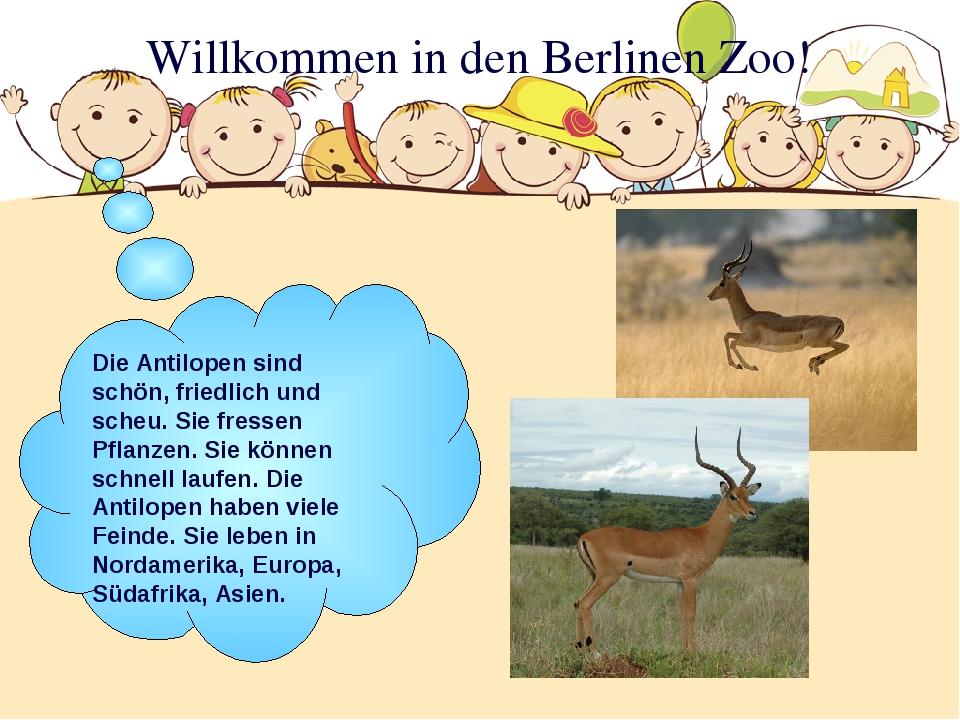 Willkommen in den Berlinen Zoo! Die Antilopen sind schön, friedlich und scheu...