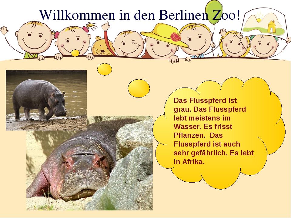 Willkommen in den Berlinen Zoo! Das Flusspferd ist grau. Das Flusspferd lebt...