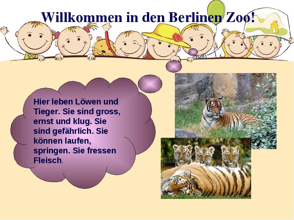 Willkommen in den Berlinen Zoo! Hier leben Löwen und Tieger. Sie sind gross,...