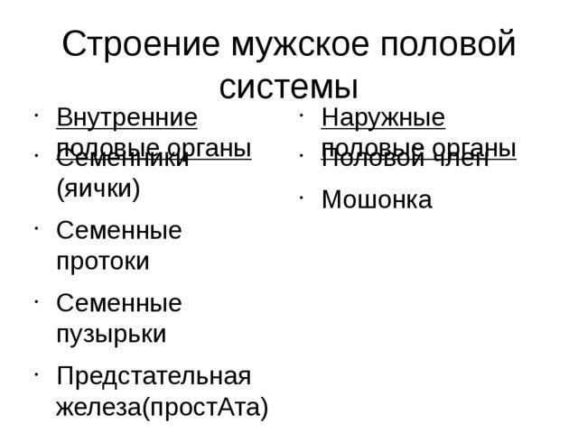 Строение мужское половой системы Внутренние половые органы Семенники (яички)...