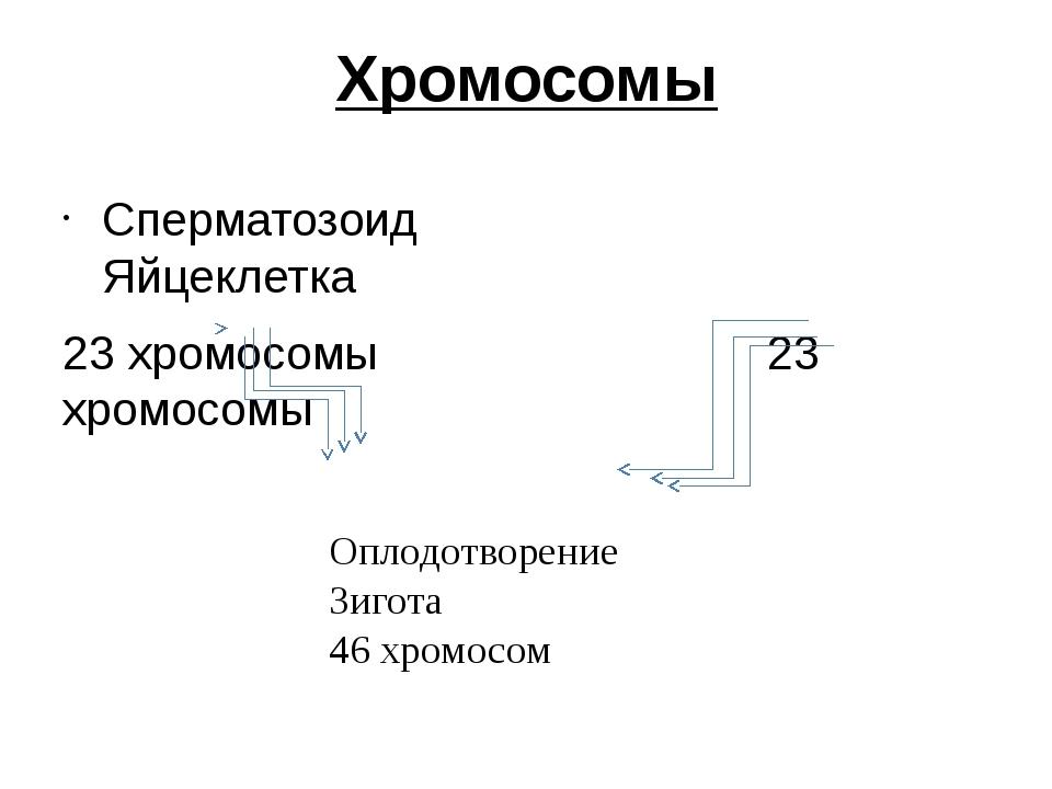 Хромосомы Сперматозоид Яйцеклетка 23 хромосомы 23 хромосомы Оплодотворение Зи...