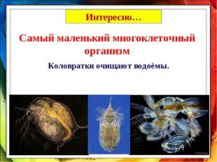 Самый маленький многоклеточный организм Коловратки очищают водоёмы. Интересно…