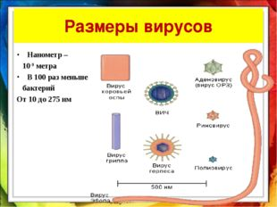 Размеры вирусов Нанометр – 10-9 метра В 100 раз меньше бактерий От 10 до 275 нм
