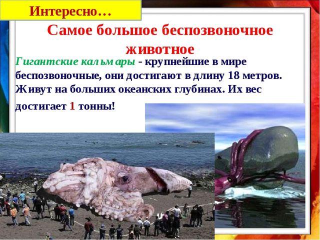 Гигантские кальмары - крупнейшие в мире беспозвоночные, они достигают в длин...