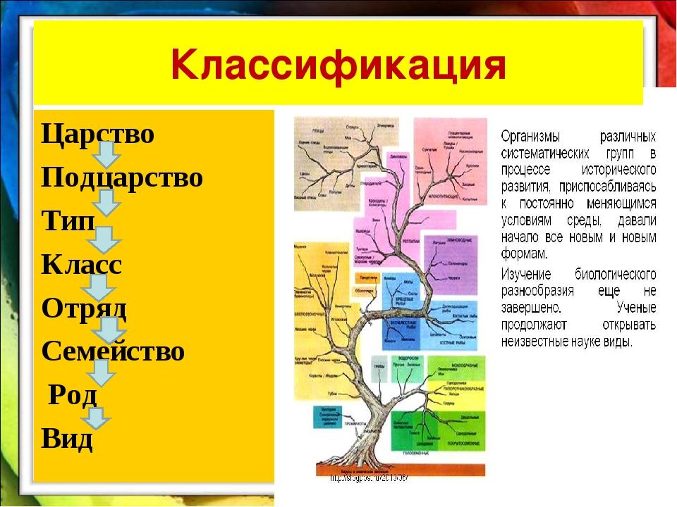 Царство Подцарство Тип Класс Отряд Семейство Род Вид Классификация