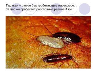 Таракан – самое быстробегающее насекомое. За час он пробегает расстояние равн