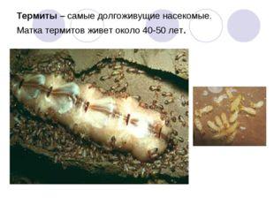 Термиты – самые долгоживущие насекомые. Матка термитов живет около 40-50 лет.