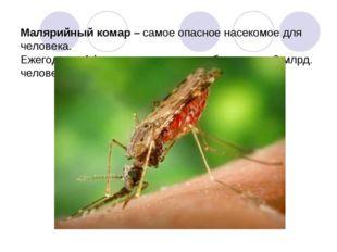 Малярийный комар – самое опасное насекомое для человека. Ежегодно в Африке о