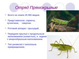 Отряд Прямокрылые Всего на земле 20 000 видов. Представители- саранча, кузне