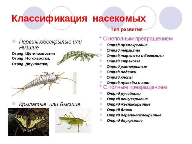 Классификация насекомых Первичнобескрылые или Низшие Отряд Щетинохвостки Отря...