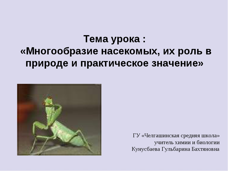 Тема урока : «Многообразие насекомых, их роль в природе и практическое значен...