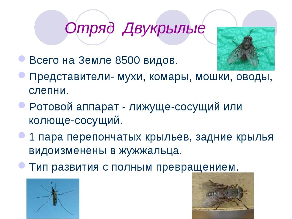 Отряд Двукрылые Всего на Земле 8500 видов. Представители- мухи, комары, мошк...