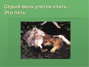 Серый волк улегся спать – Это пять.