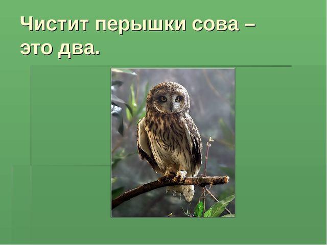 Чистит перышки сова – это два.