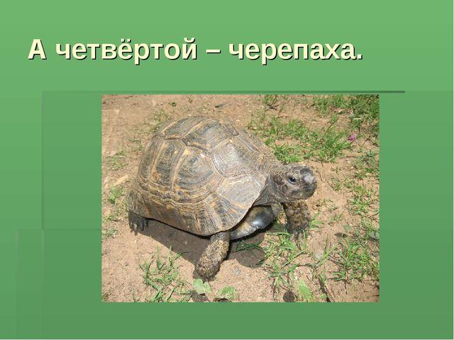 А четвёртой – черепаха.