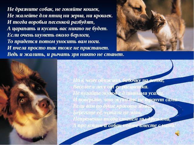 Не дразните собак, не гоняйте кошек, Не жалейте для птиц ни зерна, ни крошек....