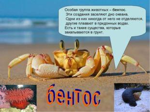 Особая группа животных –бентос. Эти создания заселяют дно океана. Одни из ни