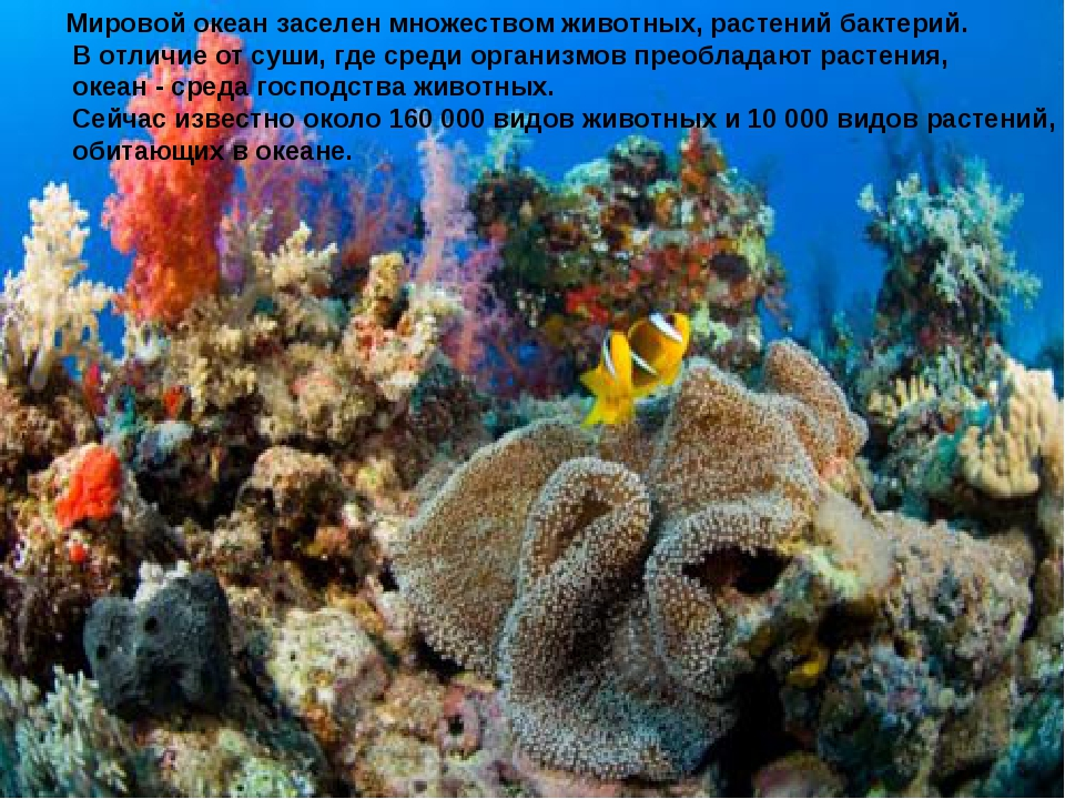 Мировой океан заселен множеством животных, растений бактерий. В отличие от су...