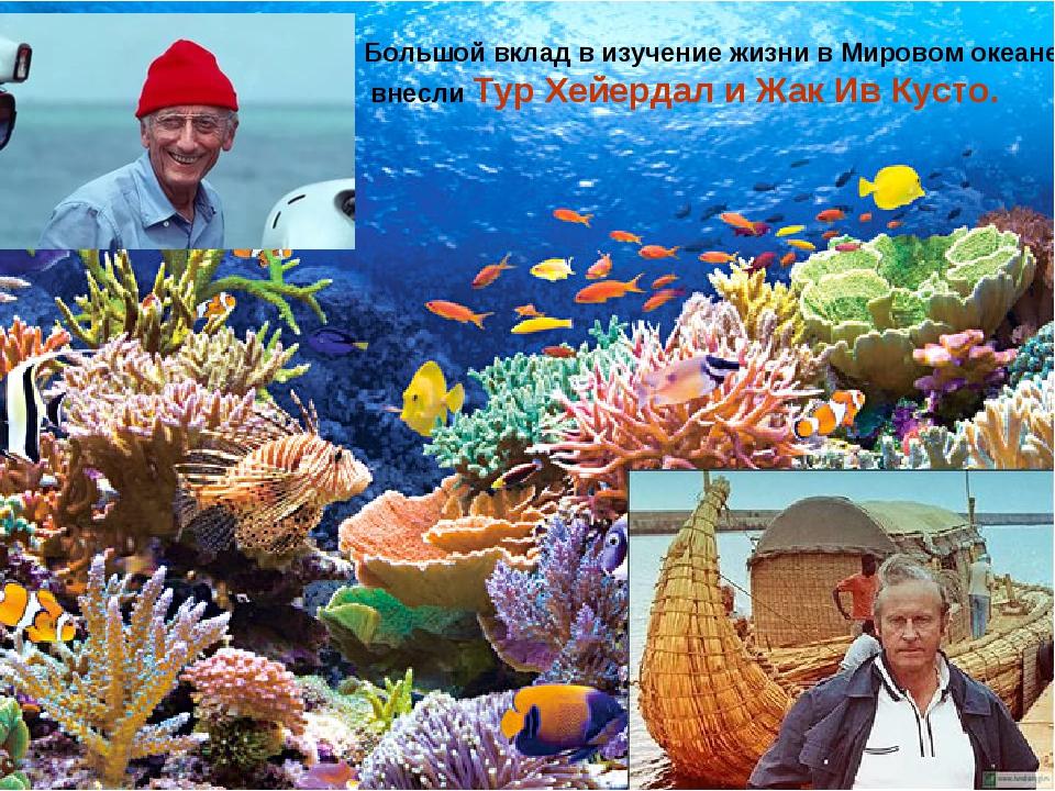 Большой вклад в изучение жизни в Мировом океане внесли Тур Хейердал и Жак Ив...