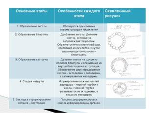 Основные этапы Особенности каждого этапа Схематичный рисунок 1. Образование з