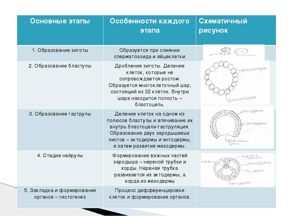 Основные этапы Особенности каждого этапа Схематичный рисунок 1. Образование з...