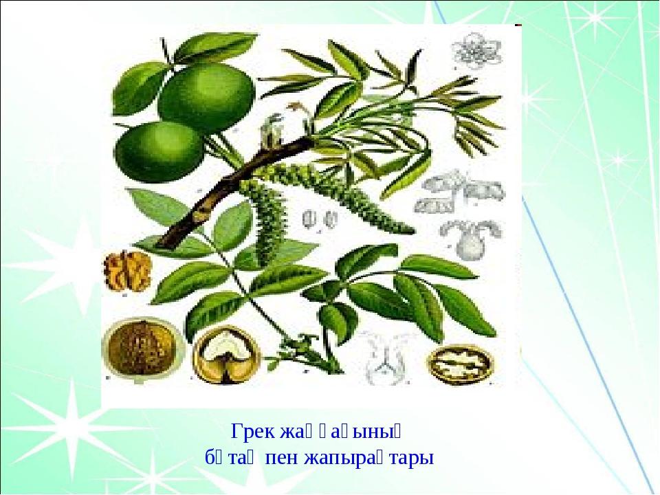 Грек жаңғағының бұтақ пен жапырақтары