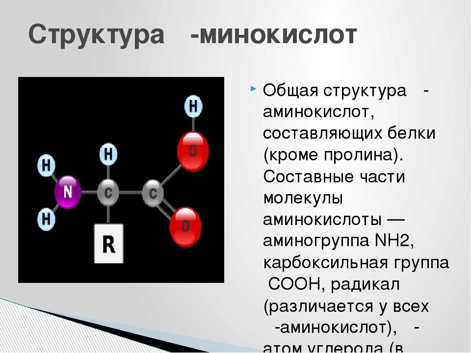 Общая структура α-аминокислот, составляющих белки (кроме пролина). Составные...