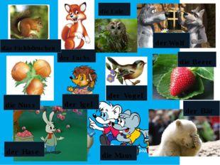 der Bär der Fuchs der Igel der Hase der Vogel die Maus das Eichhörnchen die N