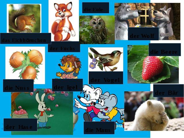 der Bär der Fuchs der Igel der Hase der Vogel die Maus das Eichhörnchen die N...