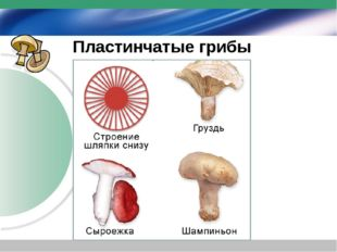 Пластинчатые грибы