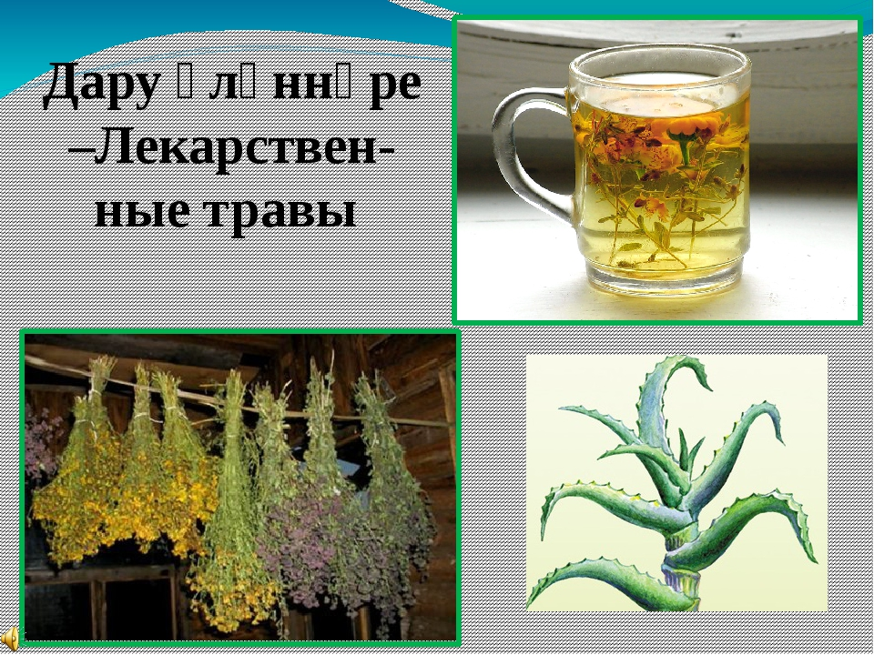 Дару үләннәре –Лекарствен-ные травы