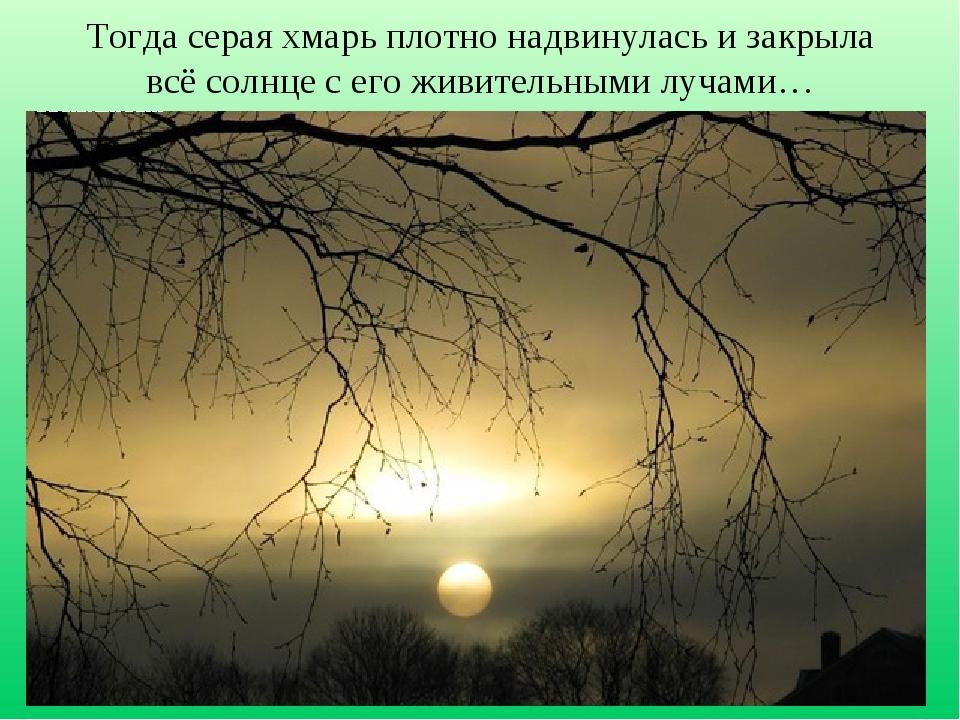 Тогда серая хмарь плотно надвинулась и закрыла всё солнце с его живительными...