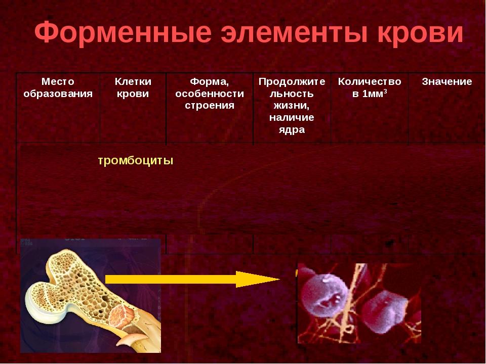Форменные элементы крови тромбоциты Место образованияКлетки кровиФорма, осо...