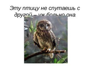 Эту птицу не спутаешь с другой – уж больно она необычная!