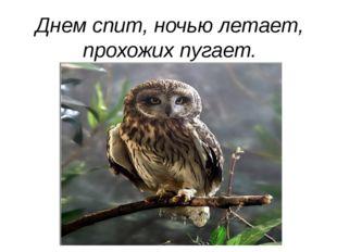 Днем спит, ночью летает, прохожих пугает.
