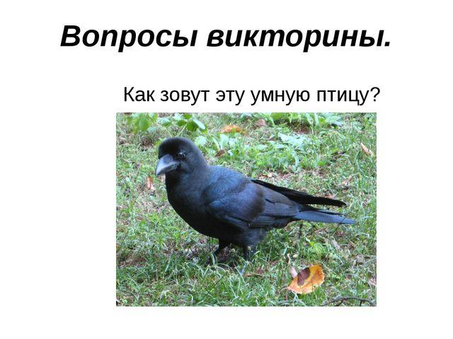 Вопросы викторины. Как зовут эту умную птицу?