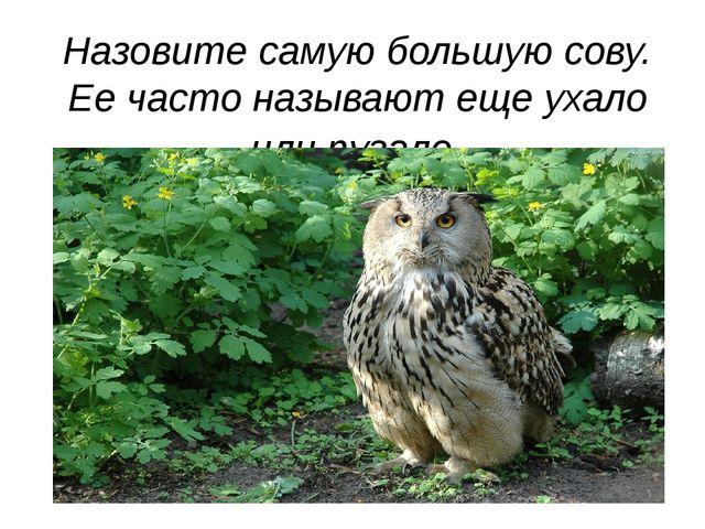 Назовите самую большую сову. Ее часто называют еще ухало или пугало.