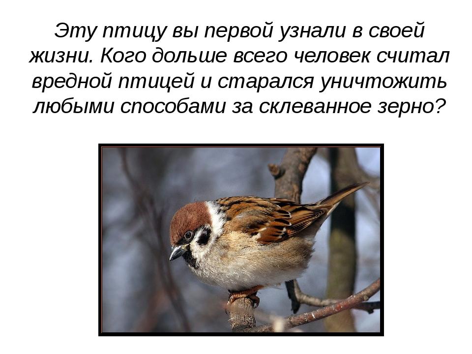 Эту птицу вы первой узнали в своей жизни. Кого дольше всего человек считал вр...