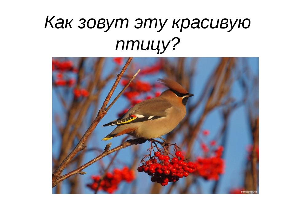 Как зовут эту красивую птицу?