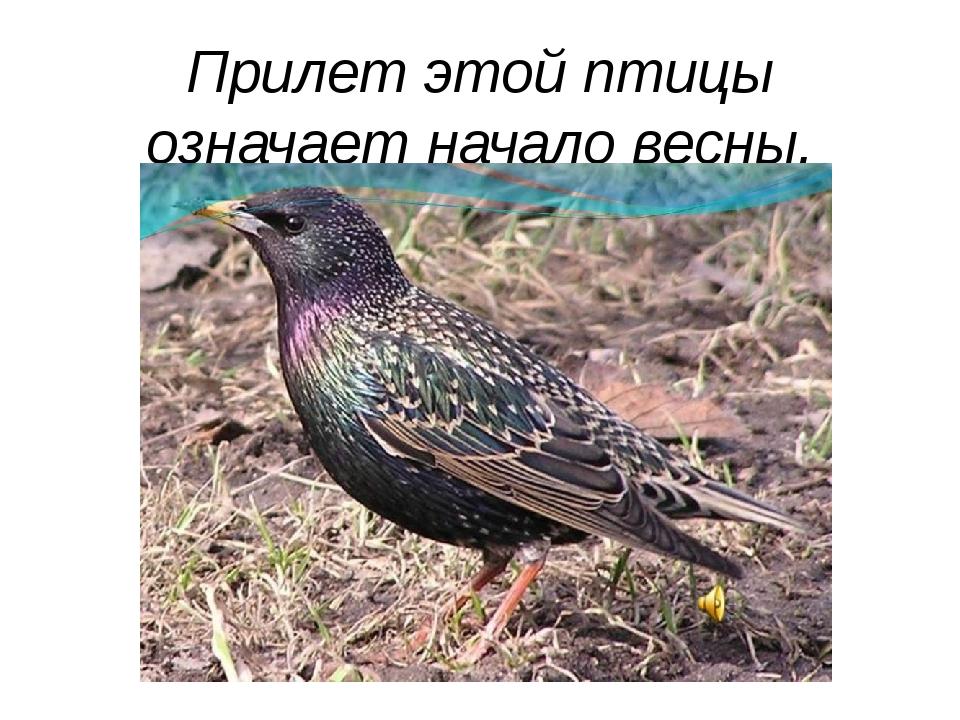 Прилет этой птицы означает начало весны.