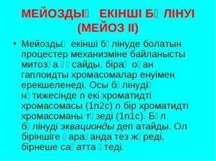 МЕЙОЗДЫҢ ЕКІНШІ БӨЛІНУІ (МЕЙОЗ ІІ) Мейоздың екінші бөлінуде болатын процестер