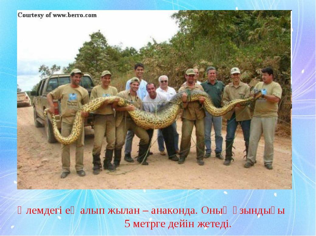 Әлемдегі ең алып жылан – анаконда. Оның ұзындығы 5 метрге дейін жетеді.