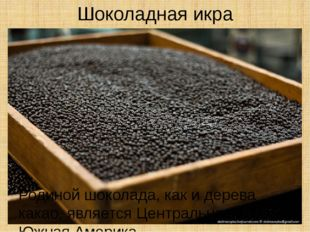 Шоколадная икра Родиной шоколада, как и дерева какао, является Центральная и