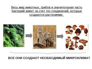 Весь мир животных, грибов и значительная часть бактерий живет за счет тех сое