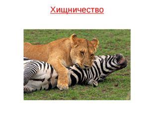 Хищничество