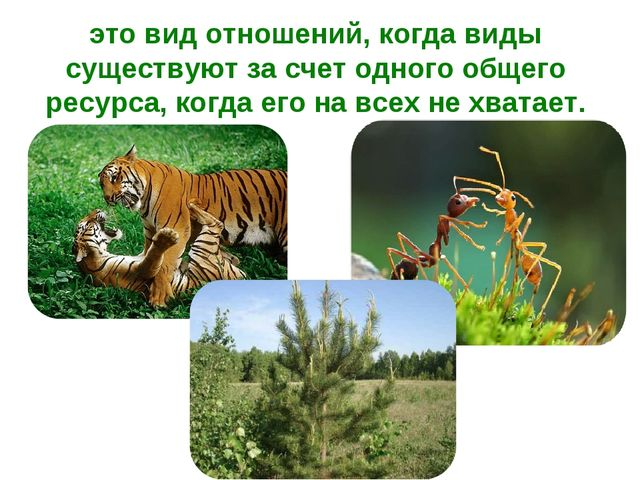 это вид отношений, когда виды существуют за счет одного общего ресурса, когда...