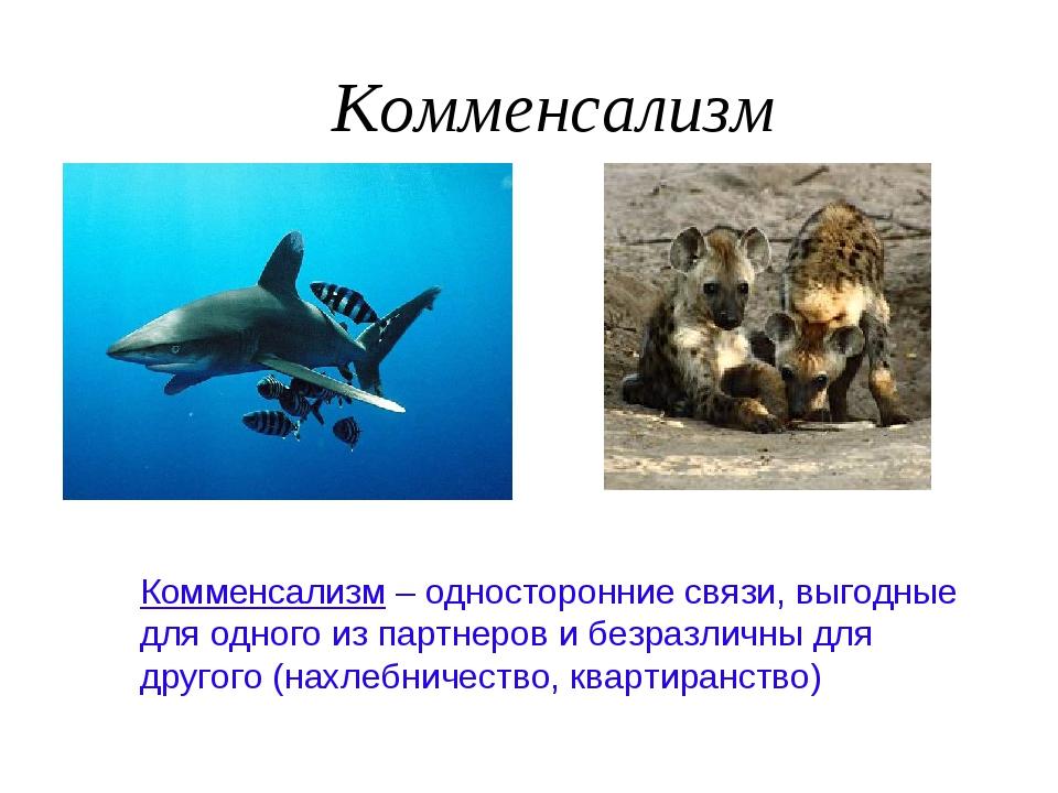 Комменсализм Комменсализм – односторонние связи, выгодные для одного из партн...