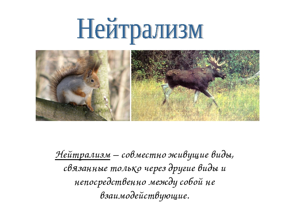 Нейтрализм – совместно живущие виды, связанные только через другие виды и неп...