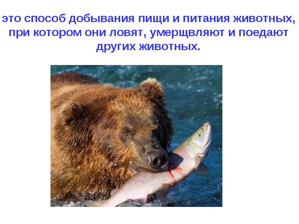это способ добывания пищи и питания животных, при котором они ловят, умерщвля...