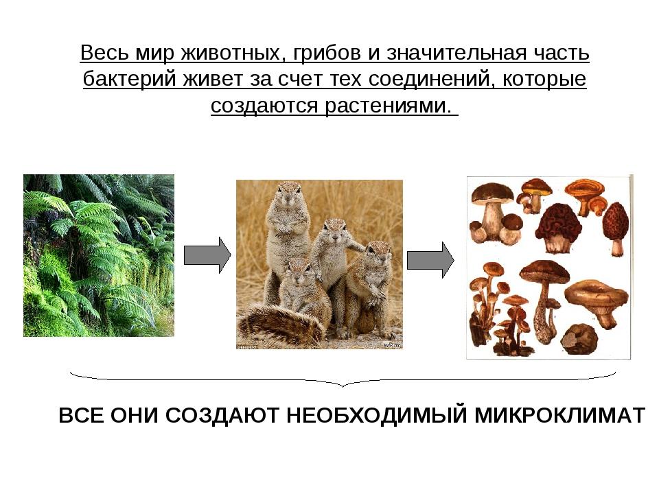 Весь мир животных, грибов и значительная часть бактерий живет за счет тех сое...